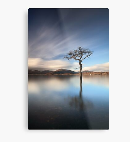 Solitary Tree Metal Print