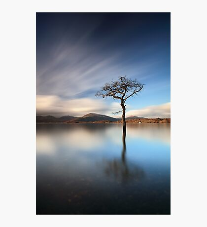 Solitary Tree Photographic Print