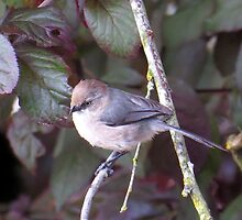 A Bushtit Perches on a Branch by photroen