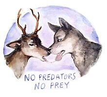 NO PREDATORS NO PREY Photographic Print
