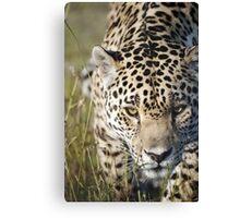 Prowling jaguar Canvas Print