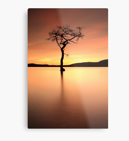 Lone Tree Afterglow Metal Print