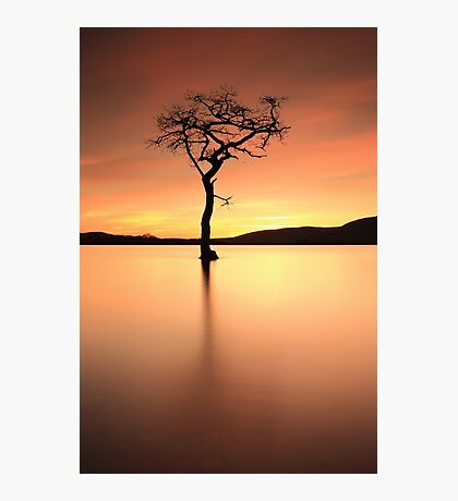 Lone Tree Afterglow Photographic Print