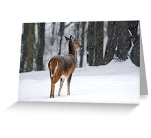 Snowy White-tailed Deer Greeting Card