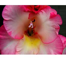 Gladiola - closeup Photographic Print