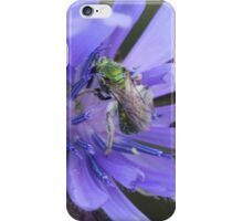 Sweat Bee on Wildflower iPhone Case/Skin