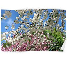 Blue Sky and Beautiful Blossoms Poster