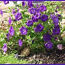 Pretty Purple Petunias by Kathryn Jones
