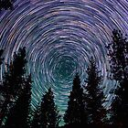 Polaris Star Trails Over Forest in King's Canyon  by Gavin Heffernan