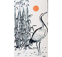 Bamboo and Crane Photographic Print