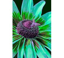 Flower with Bumble from Planet Zorg  Photographic Print