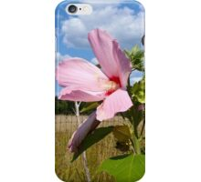 Common Marshmallow Wildflower - Althaea officinalis iPhone Case/Skin