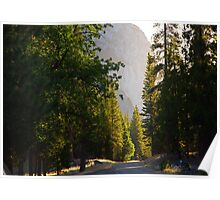 Sunrise over Trees and King's Canyon Road Poster