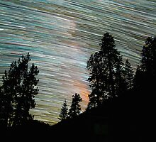 Star Trails and Giant Trees at Sequoia Park by Gavin Heffernan