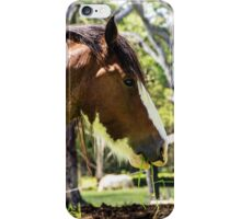 Draft Horse at work iPhone Case/Skin
