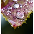 Purple Droplet by Yanni