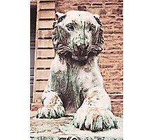 Princeton Tiger 1 Photographic Print