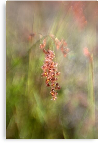 Dewy Grasses by Michelle Cocking