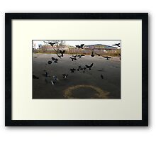 Pigeons Flight in Montreal Suburb. Framed Print