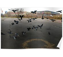 Pigeons Flight in Montreal Suburb. Poster