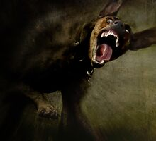Dogs with game face on .42 by Alex Preiss