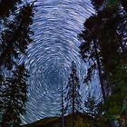 Polaris Star Trails Over Big Forest in King's Canyon by Gavin Heffernan