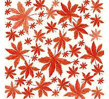 red maple leaves pattern  Photographic Print