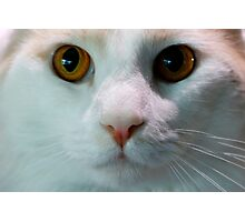 Cat up Close Photographic Print