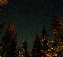 Sea of Beautiful Stars Over Forest  by Gavin Heffernan