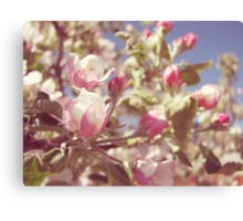 Spring Apple Blossoms Canvas Print