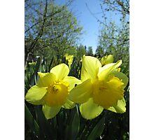 Tis Spring Photographic Print