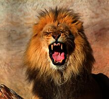 hear me roar by Barbara  Black
