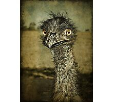 Mr Emu is a curious chap... Photographic Print