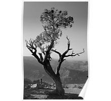 Juniper Tree at Grand Canyon II BW Poster