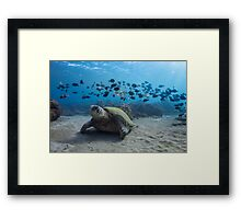Turtle and Band of Fish Framed Print