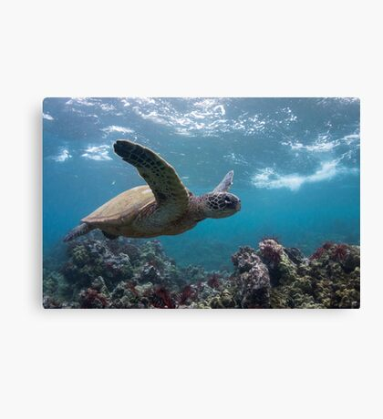 Sea of Spines Canvas Print