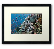 Lionfish Colours Framed Print