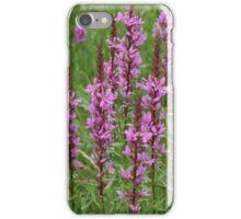 flower purple crybaby grass iPhone Case/Skin