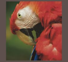 Red Parrot, the Scarlet Macaw – portrait Kids Clothes