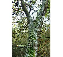 Tree with beautiful Lichens Photographic Print