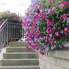 Flowering the municipal gazebo by bubblehex08