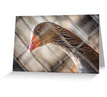 Plaid Goose Greeting Card