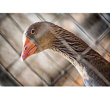 Plaid Goose Photographic Print