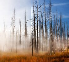 Tree Skeletons, Yellowstone National Park, USA. by PhotosEcosse