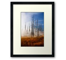Tree Skeletons, Yellowstone National Park, USA. Framed Print