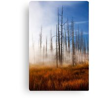 Tree Skeletons, Yellowstone National Park, USA. Canvas Print