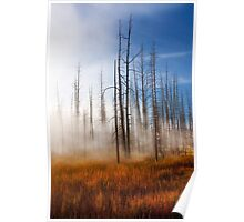 Tree Skeletons, Yellowstone National Park, USA. Poster