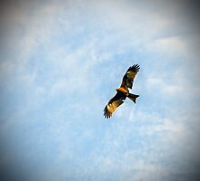 Hovering in the sky by wiedzmin