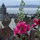 Culross Hollyhock by biddumy