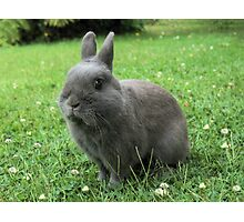Billy the Rabbit Photographic Print